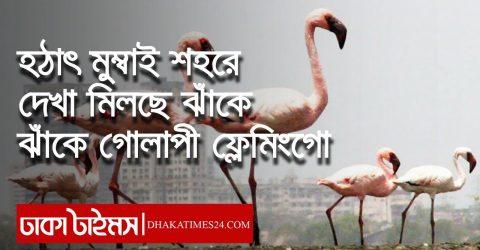 হঠাৎ মুম্বাই শহরে দেখা মিলছে ঝাঁকে ঝাঁকে গোলাপী ফ্লেমিংগো || Flamingo Birds In Mumbai ||