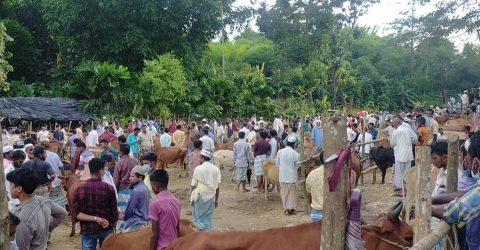 উখিয়ায় লকডাউনেও জমজমাট গরুর বাজার
