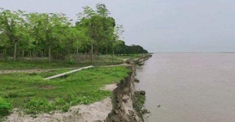 পদ্মায় পানি বৃদ্ধির ফলে চাঁপাইনবাবগঞ্জে নদী ভাঙ্গন অব্যাহত রয়েছে বিভিন্ন উপজেলায়